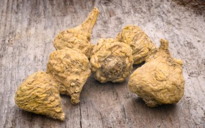 10 Health Benefits of Maca